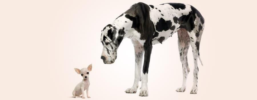 Um ano de cachorro não é igual a sete anos humanos