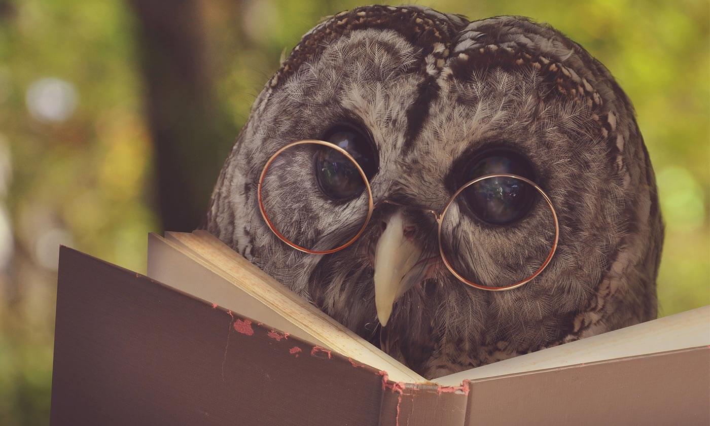 Curiosidades sobre as corujas, blog coruja feed
