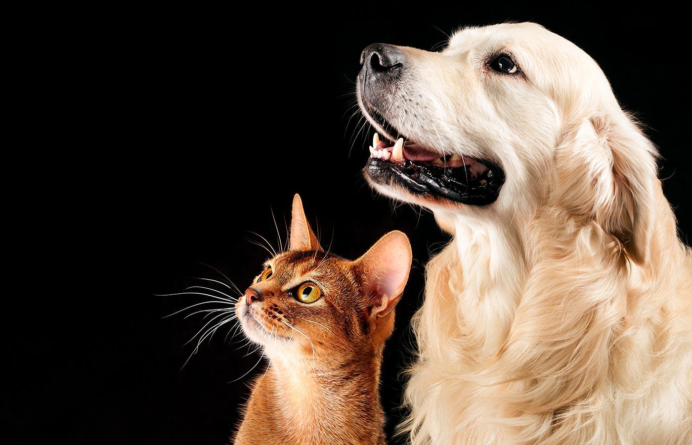 Os cães são mais inteligentes que os gatos