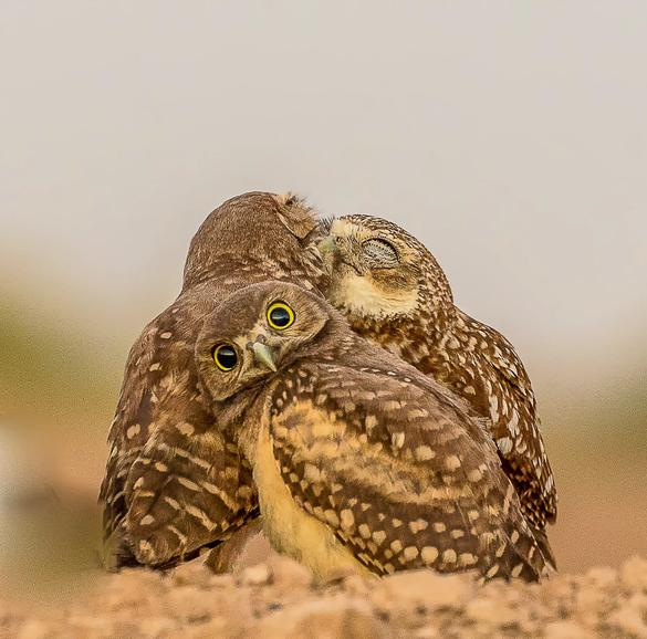 As imagens mais engraçadas do reino animal